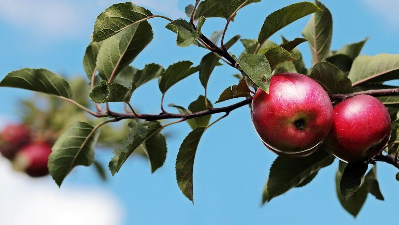 apple-2788651_1280
