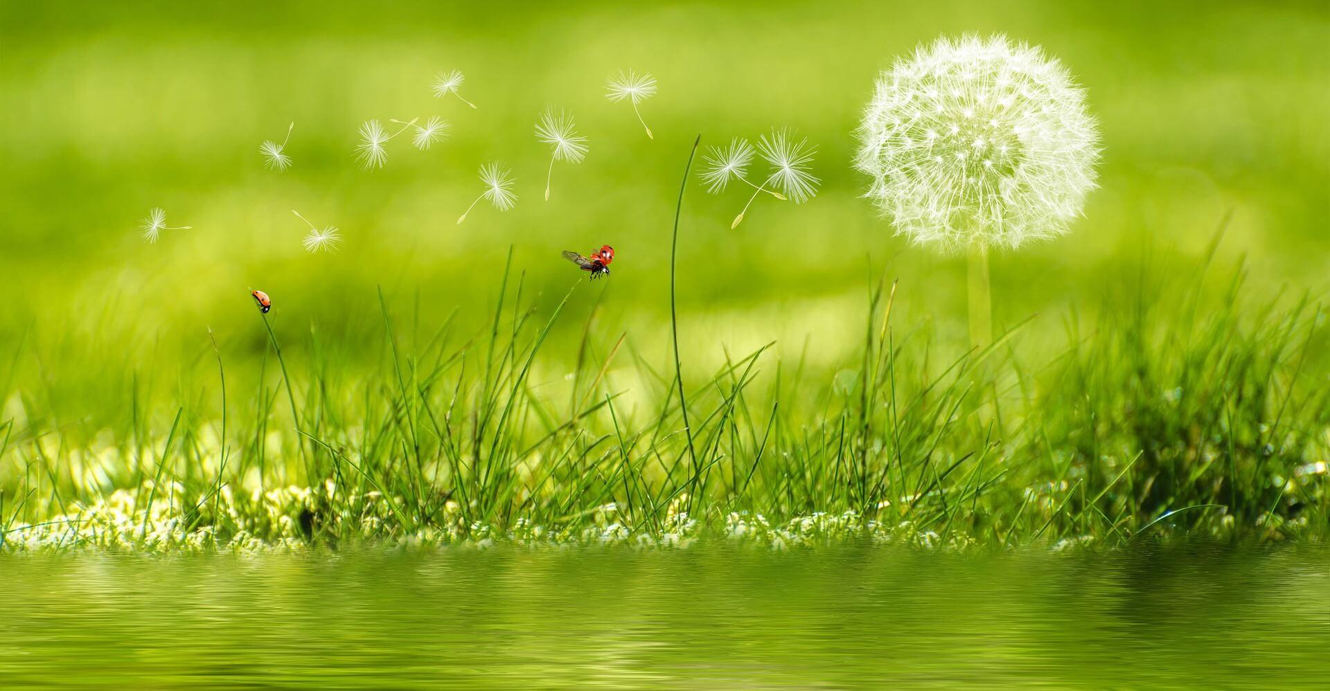 Biologische plaagbestrijding tegen bladluis, buxusmot, engerlingen, emelten, etc. Natuurlijke bestrijding, biologische oplossingen en vallen.