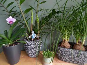 kamerplanten tuiniernatuurlijk.nl